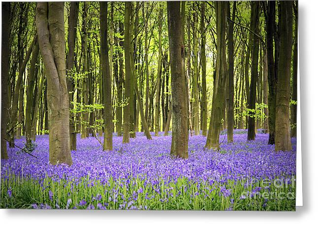 Hyacinth Greeting Cards - Bluebell carpet Greeting Card by Jane Rix