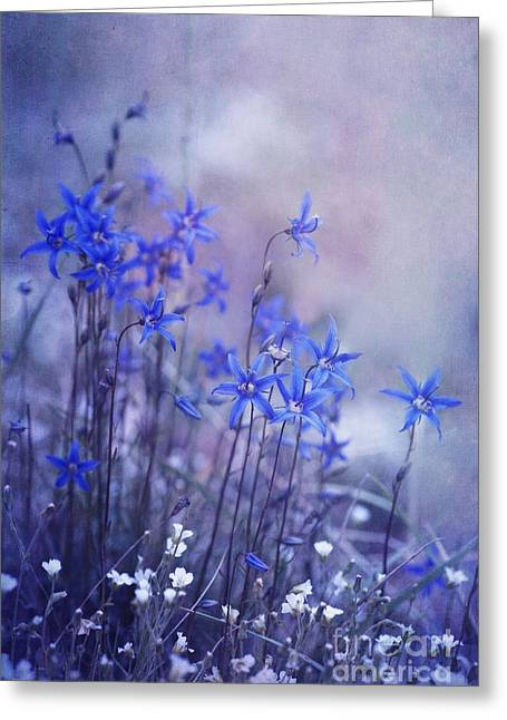 Wettstein Greeting Cards - Bluebell Heaven Greeting Card by Priska Wettstein