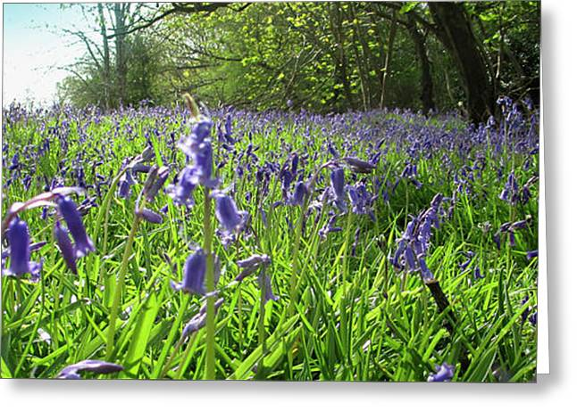 Bluebell Meadow Greeting Card by The Rambler