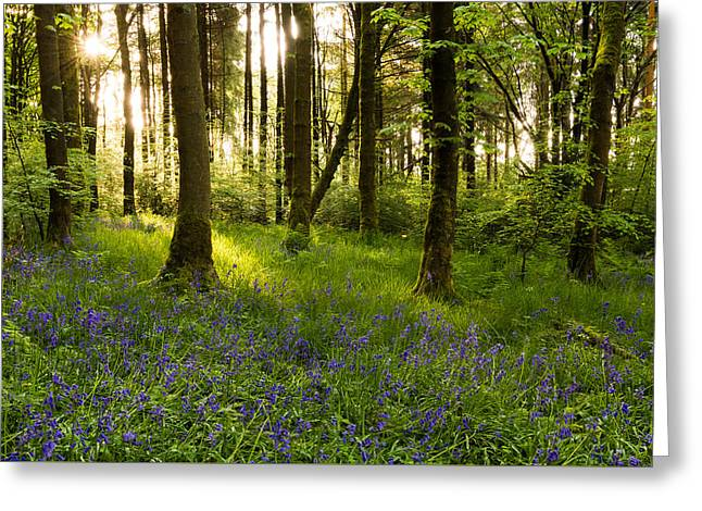 Bluebell Woods - Entwistle. Greeting Card by Daniel Kay