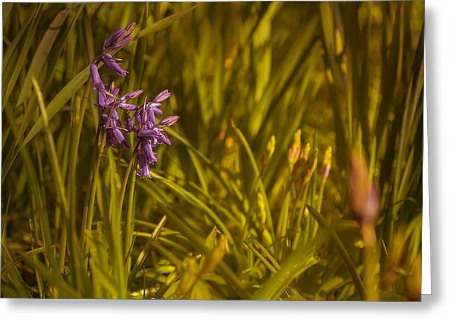 Bluebell Greeting Cards - Bluebells Greeting Card by Chris Fletcher