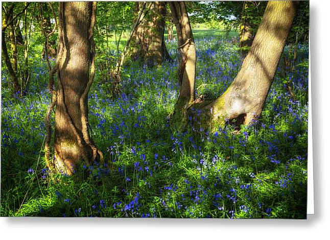 Blue Flowers Greeting Cards - Bluebells in the New Forest Greeting Card by Joana Kruse