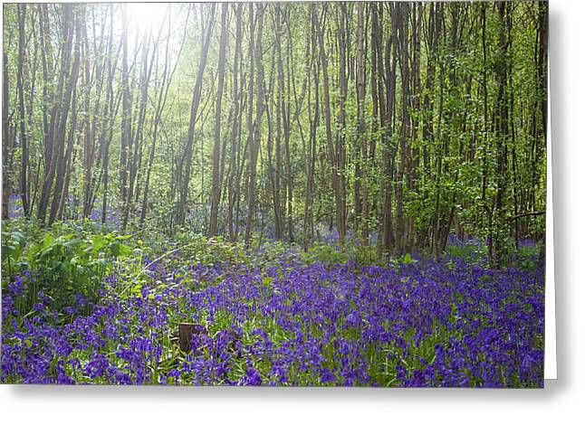 Bluebells Greeting Card by Martin Newman