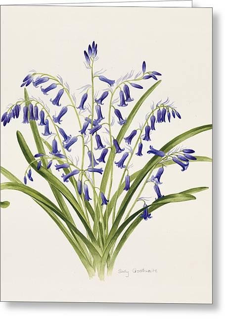 Bluebells Greeting Card by Sally Crosthwaite