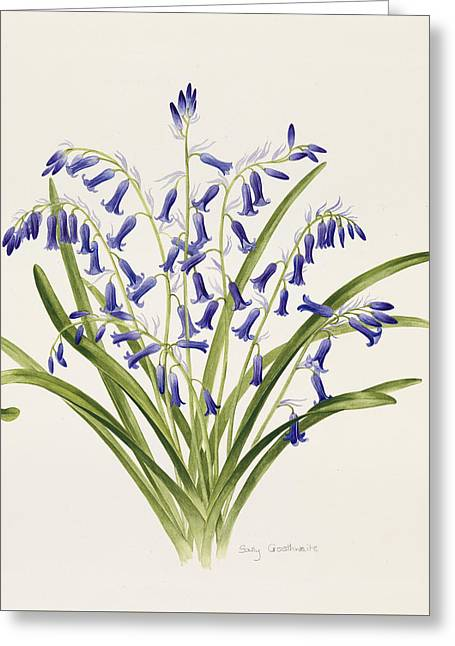 Blue Flowers Drawings Greeting Cards - Bluebells Greeting Card by Sally Crosthwaite