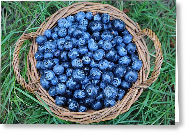 Harvest Art Greeting Cards - Blueberries Harvest Greeting Card by Vicky Adams