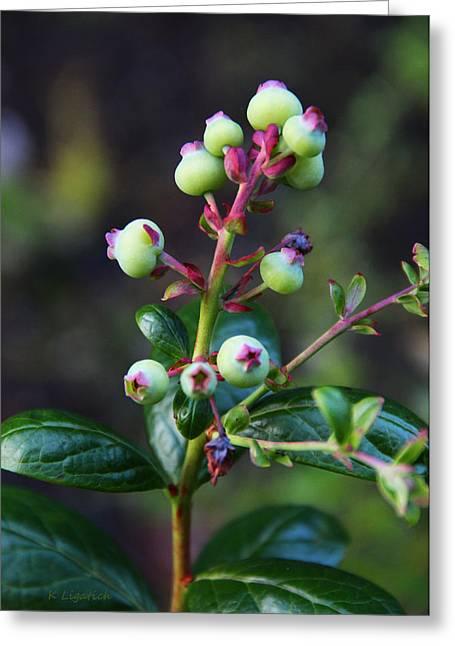 Blueberries Greeting Card by Kerri Ligatich
