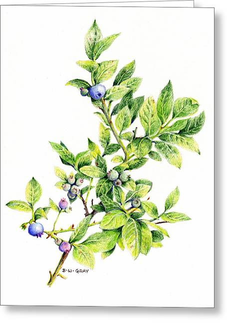 Blueberry Drawings Greeting Cards - Blueberry Branch Greeting Card by Betsy Gray