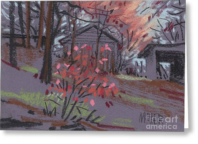 Blueberry Bush In Fall Greeting Card by Donald Maier