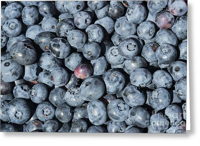 Usa Photographs Greeting Cards - Blueberry Picking Greeting Card by John Greim