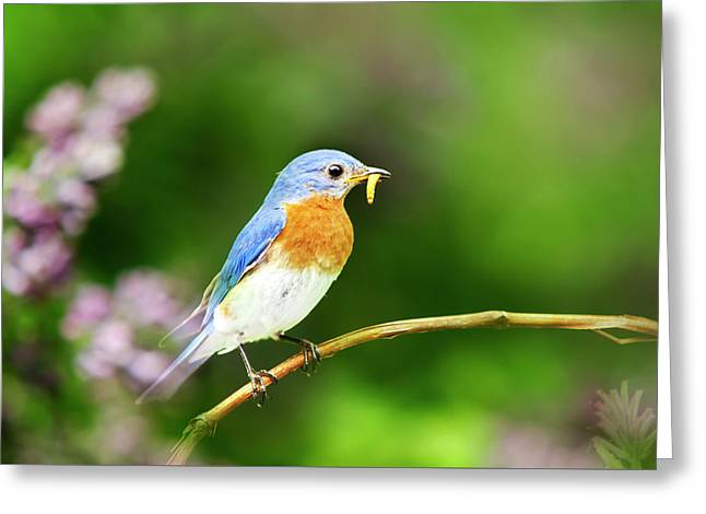 Bluebird Greeting Card by Christina Rollo