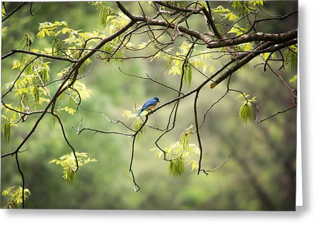 Flying Bird Greeting Cards - Bluebird in the Spring Greeting Card by Shelby  Young