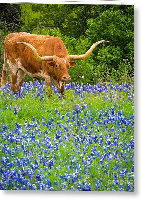 Steer Photographs Greeting Cards - Bluebonnet Longhorn Greeting Card by Inge Johnsson