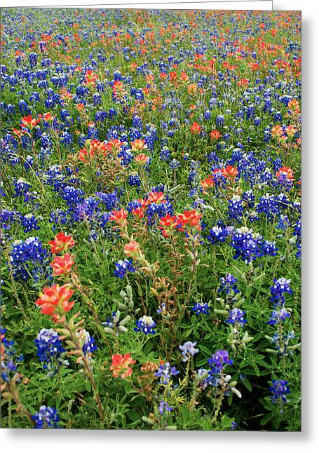 Bluebonnet Landscape Greeting Cards - Bluebonnets and Paintbrushes 3 - Texas Greeting Card by Brian Harig