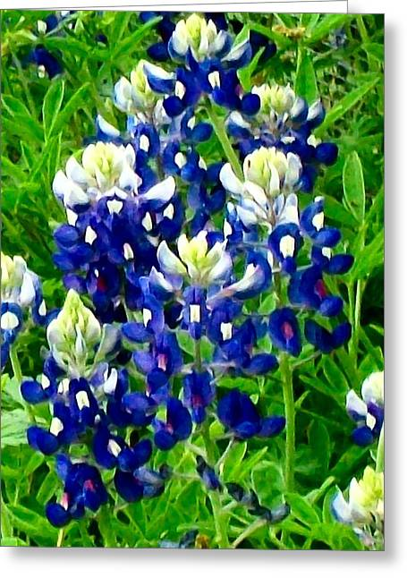 Wild Flowers Of Texas Greeting Cards - Bluebonnets two Greeting Card by Mountain Femme