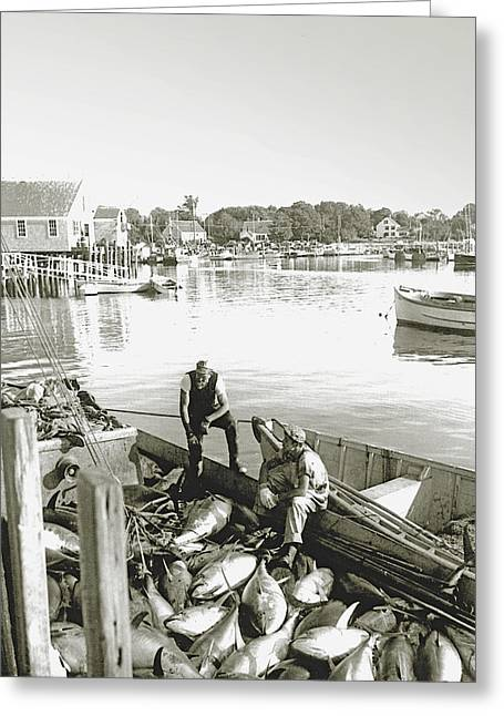 Cape Cod Bay Greeting Cards - Bluefin Tuna at Barnstable Harbor Greeting Card by Charles Harden