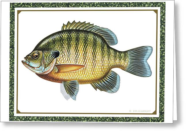 Baits Greeting Cards - Bluegill print Greeting Card by JQ Licensing