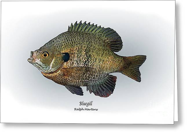 Angling Drawings Greeting Cards - Bluegill Greeting Card by Ralph Martens