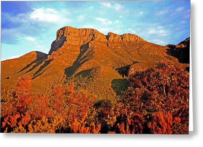 Range Pyrography Greeting Cards - Bluff Knoll at Sunset WA Greeting Card by Tony Brown