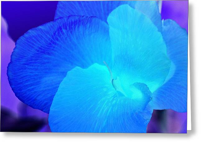 Blurple Flower Greeting Card by James Granberry