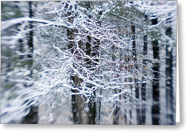 Woodland Views Greeting Cards - Blurred Shot Of Snow-covered Trees Greeting Card by Tim Laman