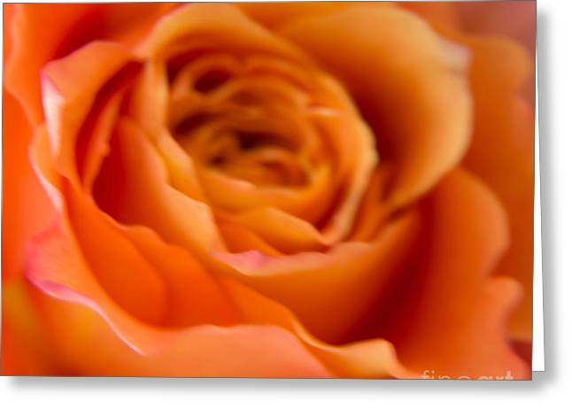 Peaches Pyrography Greeting Cards - Blurry Peach Rose Greeting Card by Olga Photography