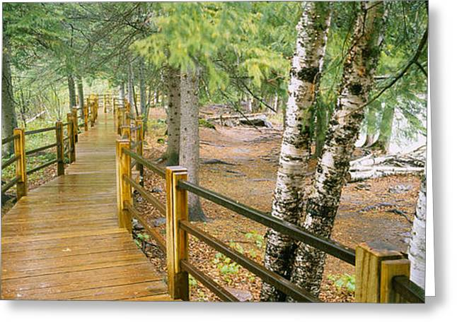 Tree Roots Photographs Greeting Cards - Boardwalk Along A River, Gooseberry Greeting Card by Panoramic Images