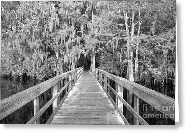 Manatee Springs Greeting Cards - Boardwalk Into The Cypress In Black And White Greeting Card by Adam Jewell