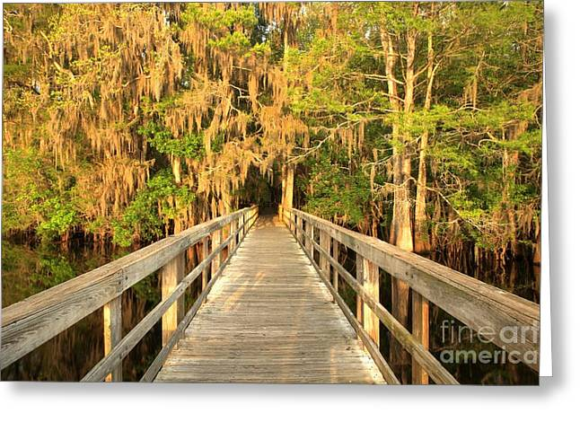 Manatee Springs Greeting Cards - Boardwalk Through The Cypress Greeting Card by Adam Jewell