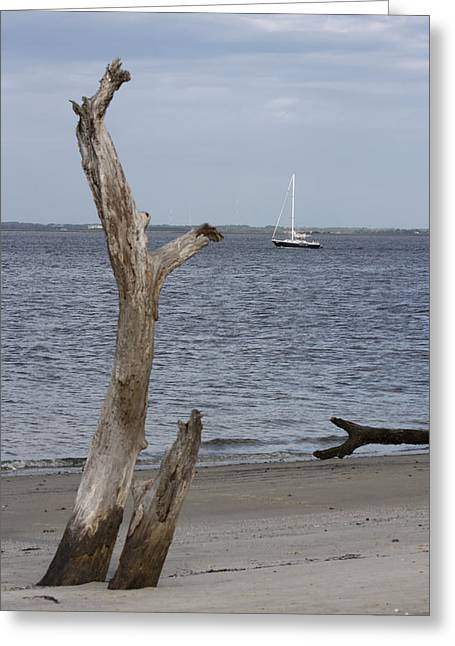 Jekyll Greeting Cards - Boat at Driftwood Beach  Greeting Card by Dana  Oliver