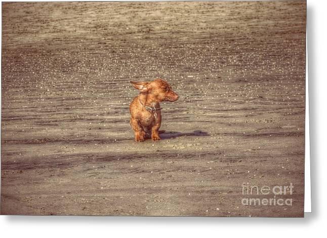 Dog Walking Greeting Cards - Bob The Boss Greeting Card by Leah McPhail