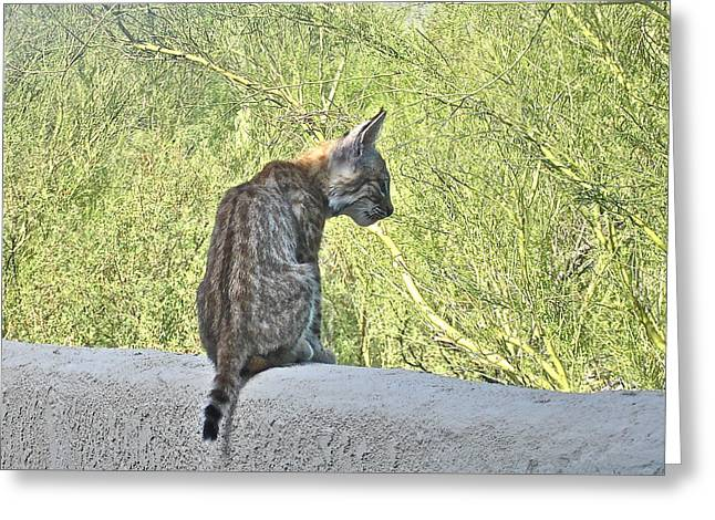 Bobcats Photographs Greeting Cards - Bobcat Kitten Listening Greeting Card by Bonnie See