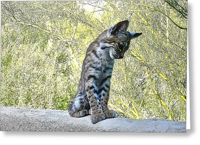 Bobcats Photographs Greeting Cards - Bobcat Kitten Posing Greeting Card by Bonnie See