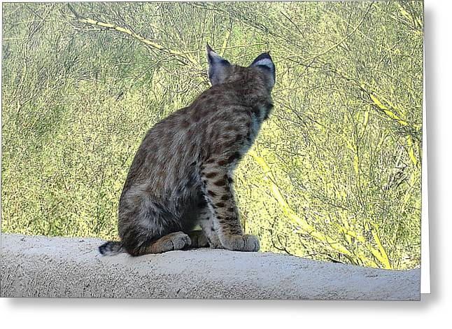Bobcats Photographs Greeting Cards - Bobcat Kitten Tuned In Greeting Card by Bonnie See