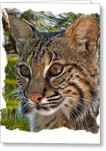 Bobcats Greeting Cards - Bobcat Greeting Card by Larry Linton
