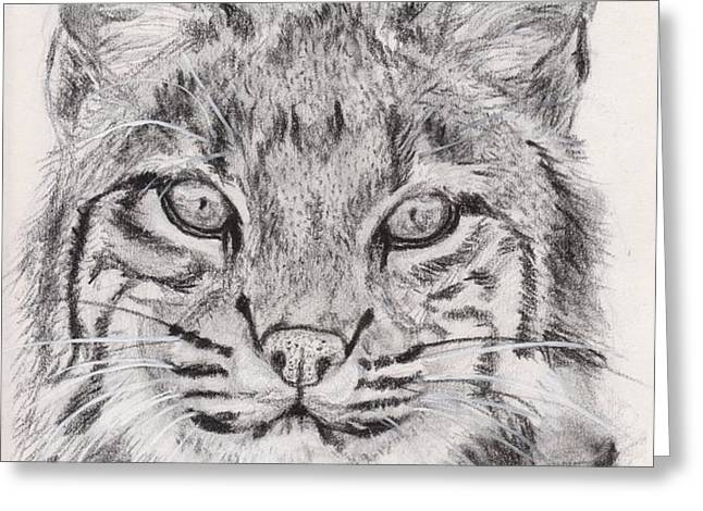 Bobcat Greeting Card by Marqueta Graham