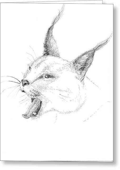 Pen And Ink Bobcats Drawings Greeting Cards - Bobcat Greeting Card by Crazy Cat Lady