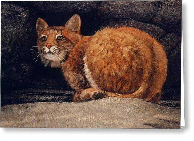 Bobcat On Ledge Greeting Card by Frank Wilson