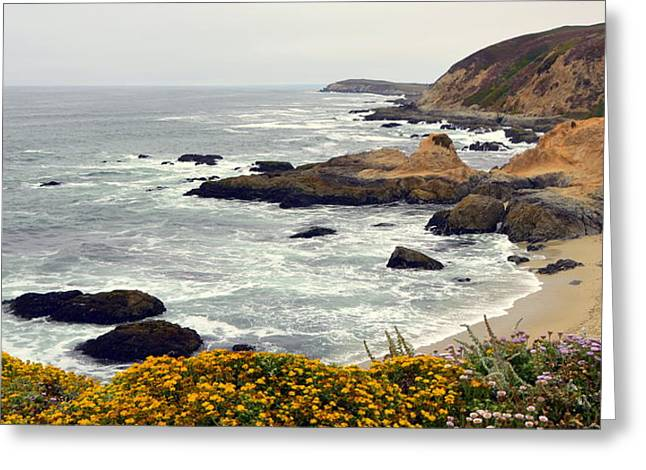 Bodega Head Coastal Landscape Greeting Card by Carla Parris