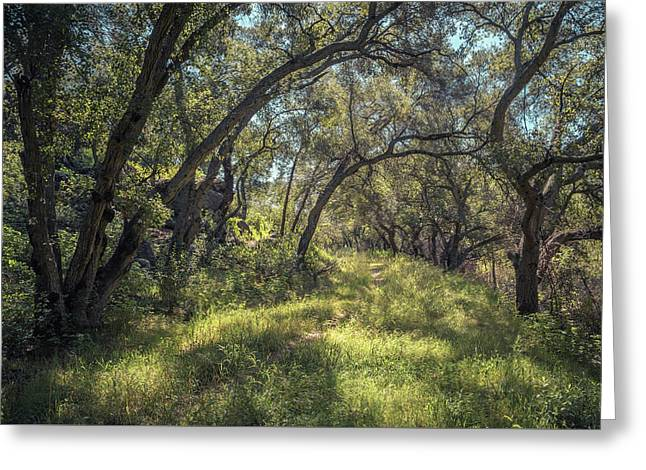 Boden Canyon - Green Canopy Greeting Card by Alexander Kunz