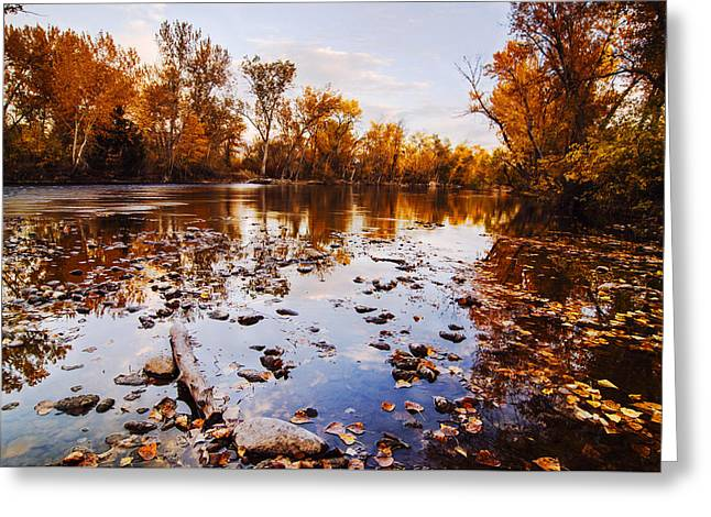Nature Greeting Cards - Boise River Autumn Glory Greeting Card by Vishwanath Bhat