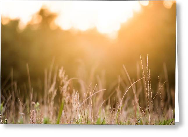 Harvest Art Greeting Cards - Bokeh at Sunset Greeting Card by Shelby  Young
