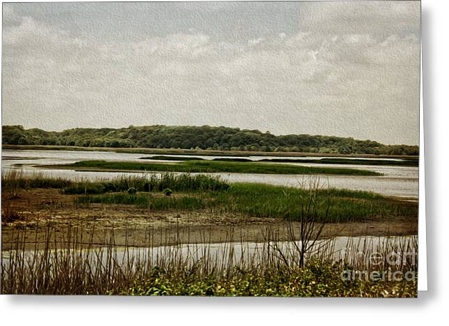 Nature Study Greeting Cards - Bombay Hook Greeting Card by Tom Gari Gallery-Three-Photography