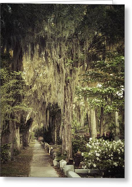 Moss Greeting Cards - Bonaventure Cemetery Lane Greeting Card by Joan Carroll