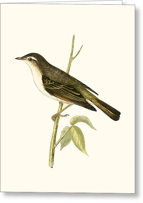 Bonelli's Warbler Greeting Card by English School