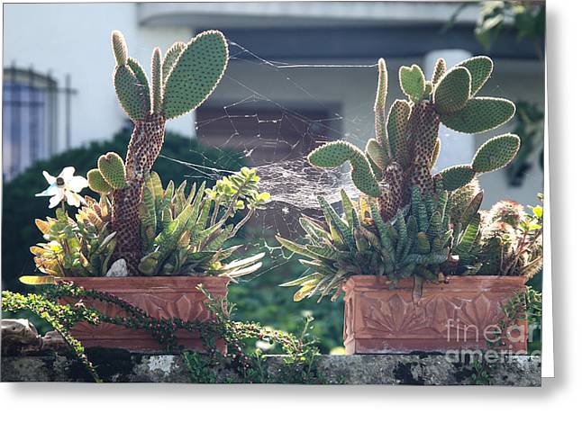 Swiss Greeting Cards - Bonsai Cactus Greeting Card by Ning Mosberger-Tang