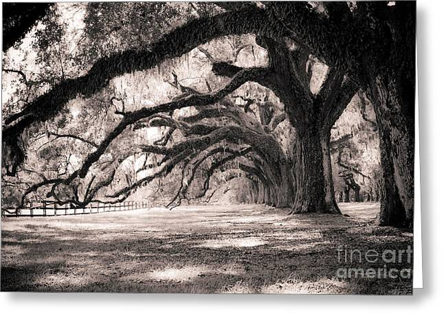 Tree Greeting Cards - Boone Hall Plantation Live Oaks Greeting Card by Dustin K Ryan