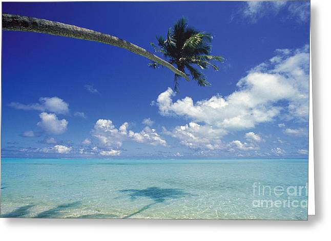 Bora Bora Greeting Cards - Bora Bora, Palm Tree Greeting Card by Ron Dahlquist - Printscapes