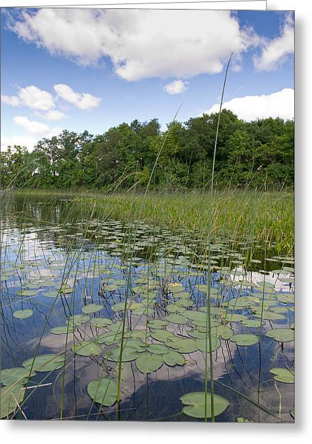Camelot Photographs Greeting Cards - Borden Lake lily pads Greeting Card by Gary Eason