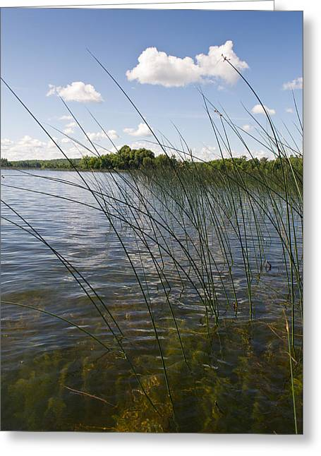 Camelot Photographs Greeting Cards - Borden Lake reeds Greeting Card by Gary Eason